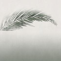 棕榈-原创定制壁画   装饰画/墙饰