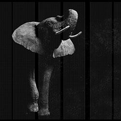 非洲-原创定制壁画   装饰画/墙饰